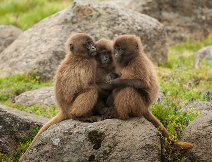 PA162380 
