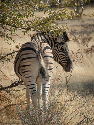 DSC 4195 
