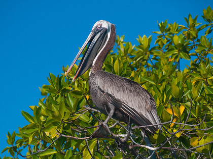 P4081890 